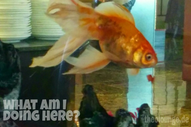 Goldfisch2