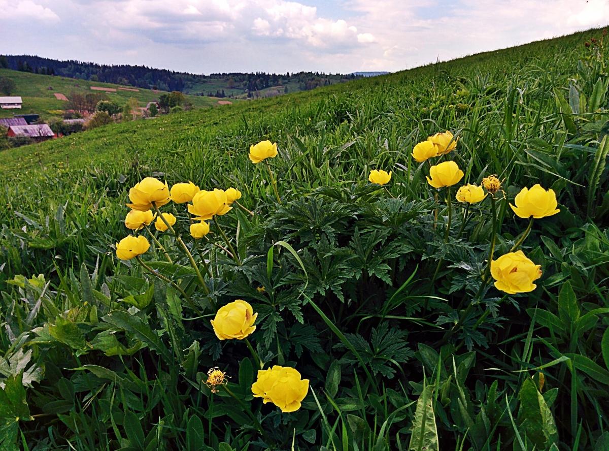 Zum Frühlingsanfang