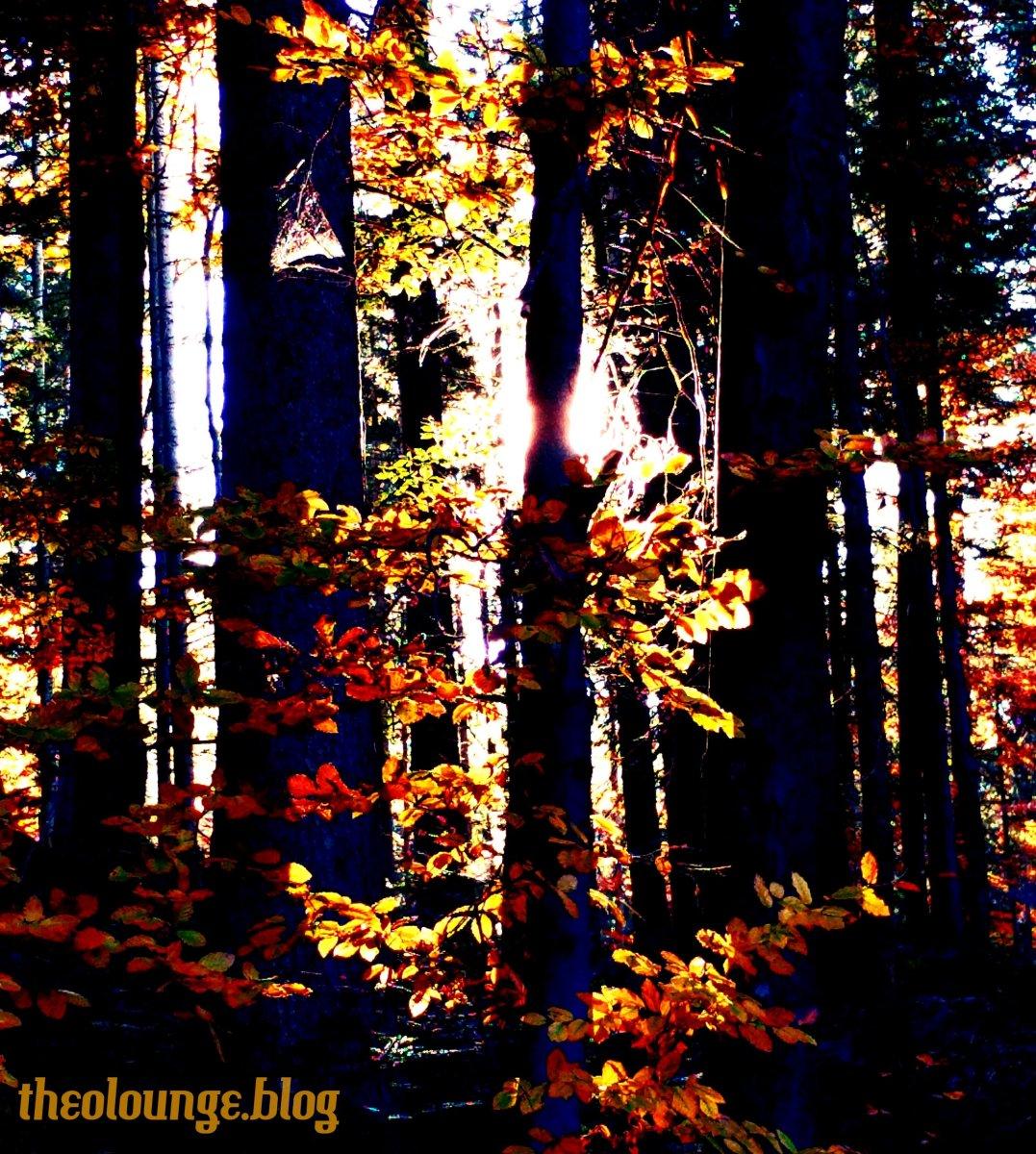 Wer will Waldkindergärten?