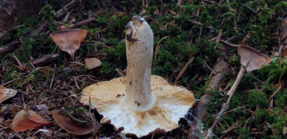 Was macht ein Pilz, wenn er mal hinfällt?