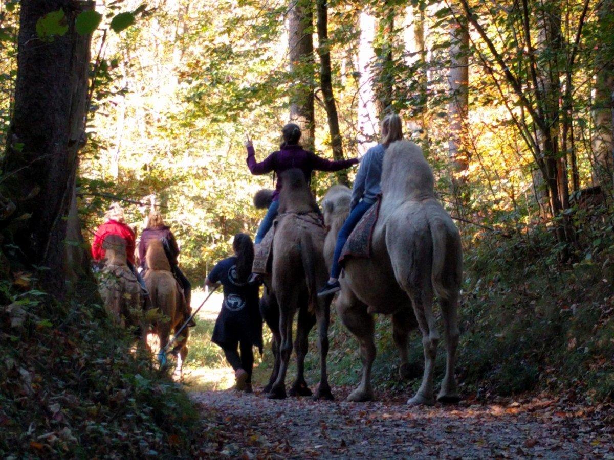 Kamele im Herbst. Und das in Bayern.