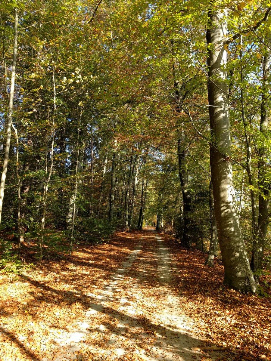 Herbst im Voralpenland