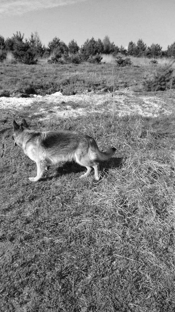 Der Wolf ist jetzt da. Im Wohngebiet.
