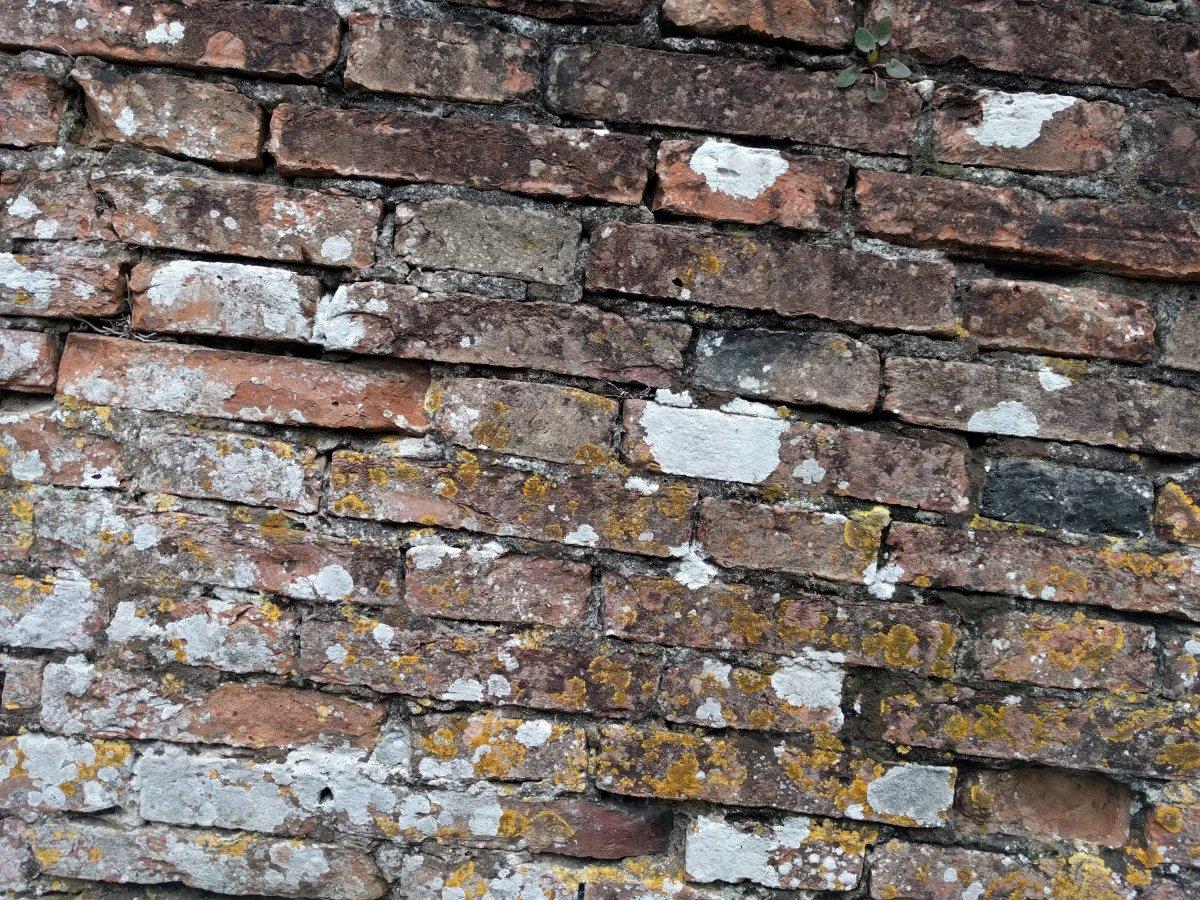 Wenn einer eine Mauer baut