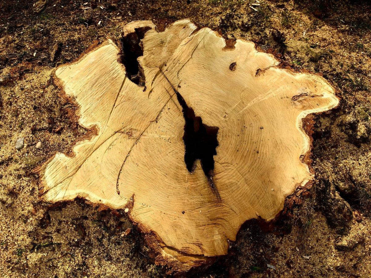 Der Baum des Tages