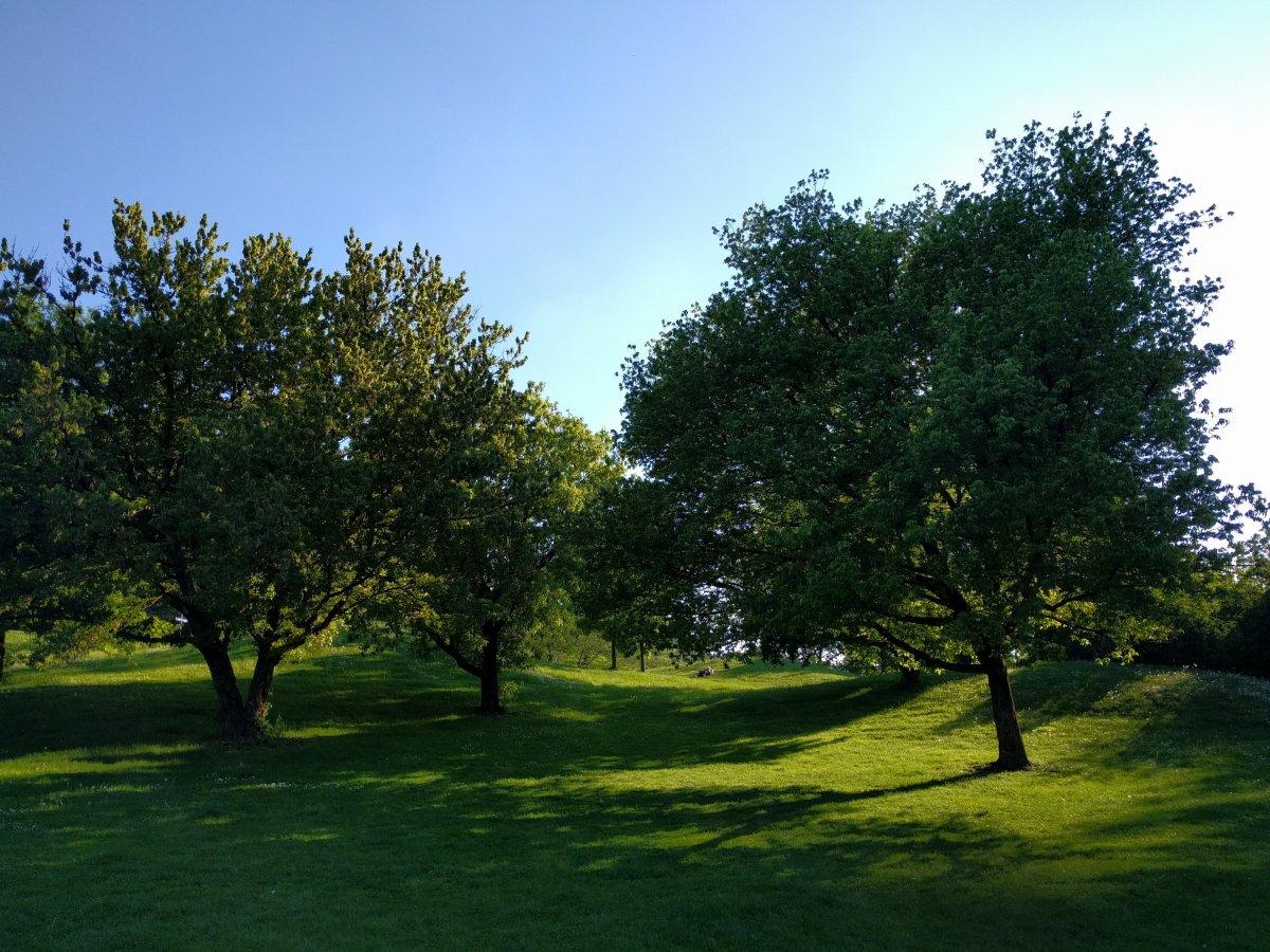 Die Bäume des Tages
